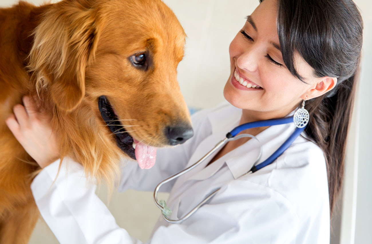 Pet Care & Services in Ranchi
